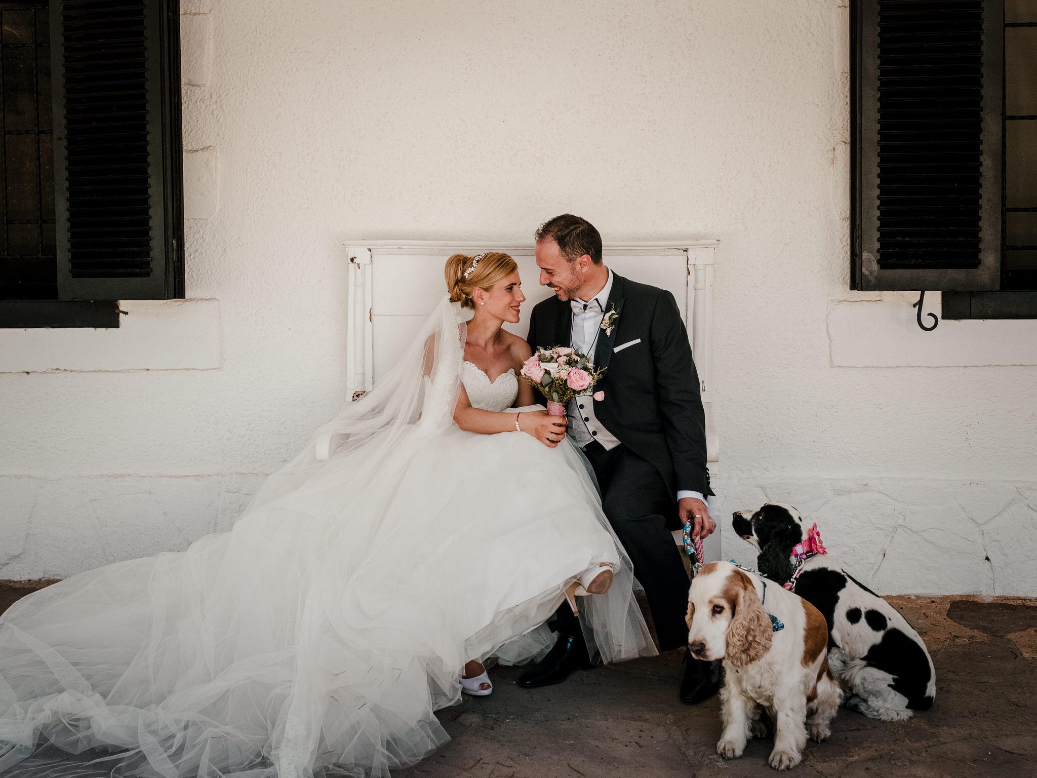 boda-pet-friendly-en-el-bohio