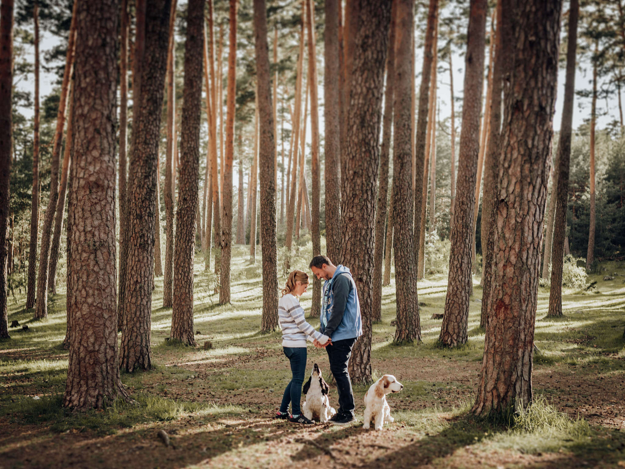 preboda-pet-friendly-en-el-pinar-de-valsain-segovia
